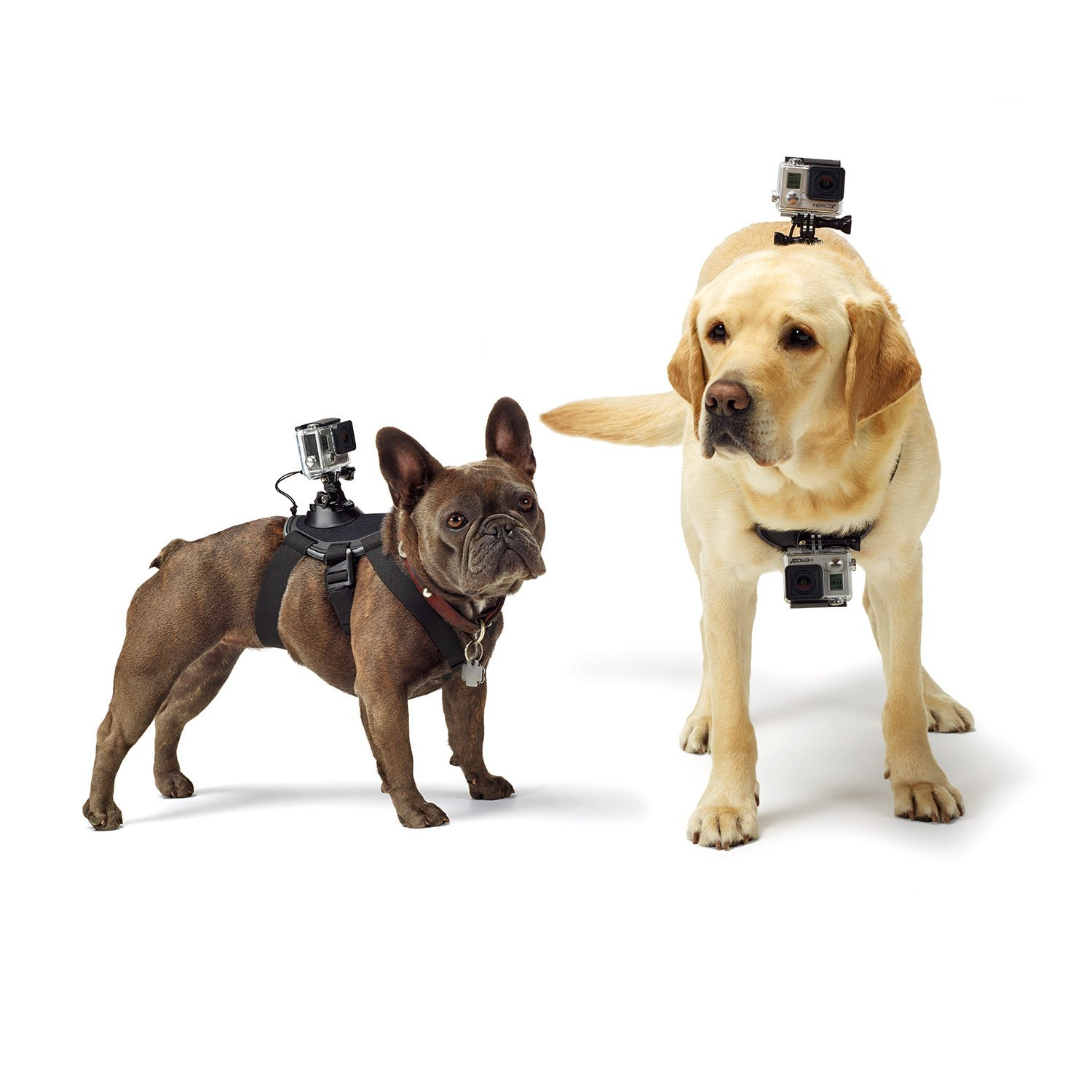 GoPro Fetch Dog Harness Mount for Camera1
