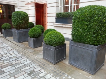 Rosewood Cube lead Planters