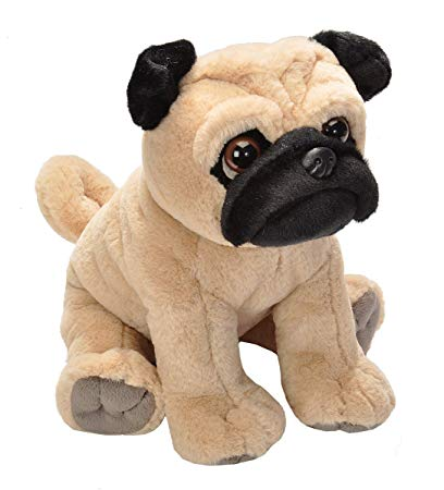Cute Little Pug  - Fully Customisable Plush