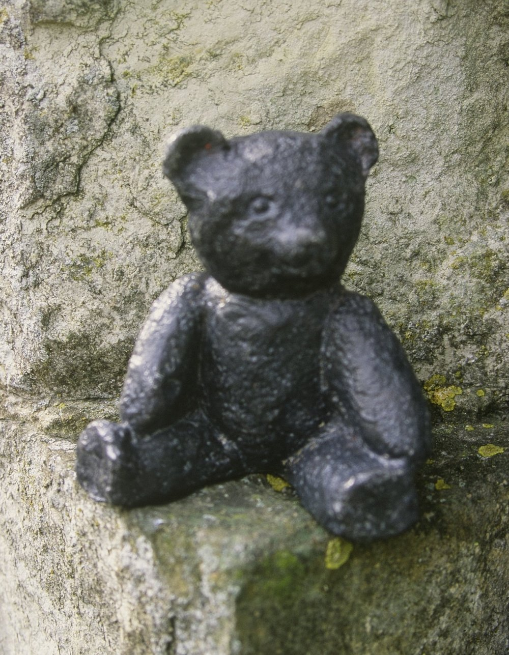 a Lead Teddy